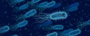 CBD shown to kill Gram-negative bacteria